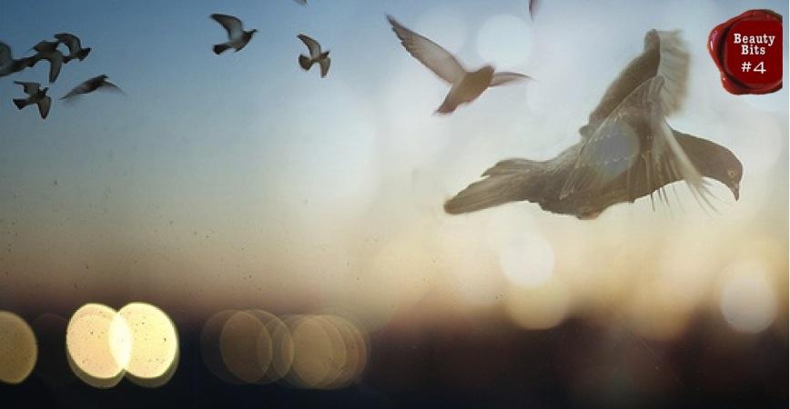 Слушать и скачать песню летите голуби летите