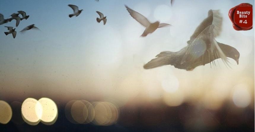 Birds_BB4