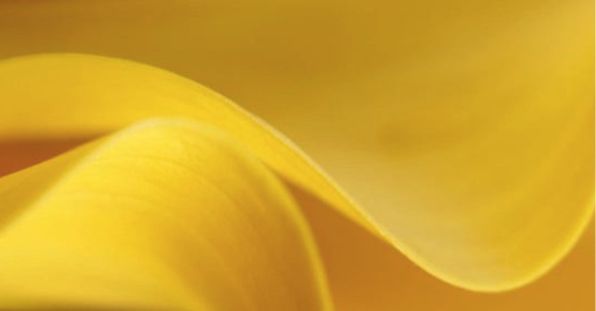 Yellow_Calla